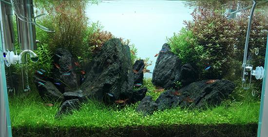 1-3良好园林 青龙石.jpg